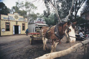 Sovereign Hill Horse Front