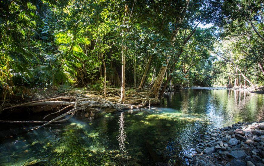 Daintree Forest Queensland